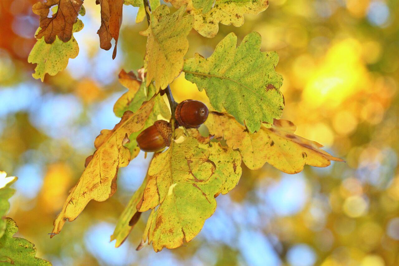 fall-foliage-1467583_1920